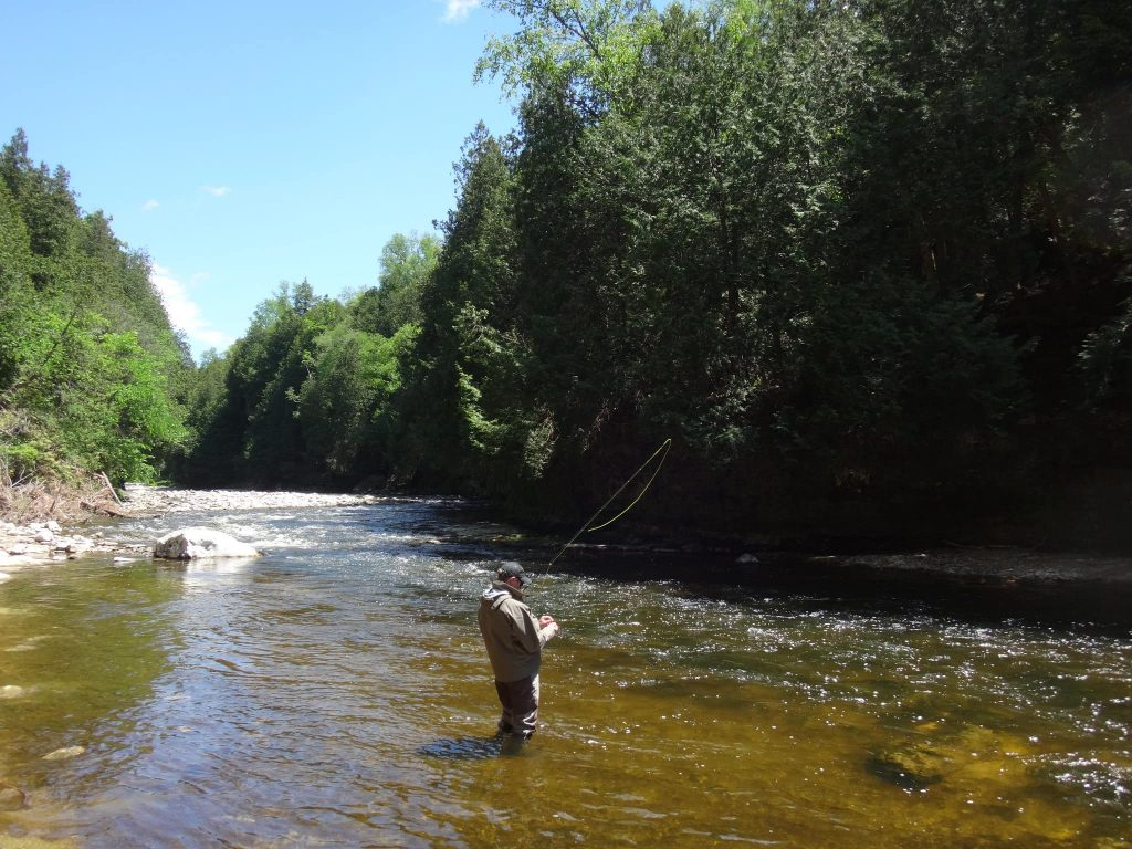 Ontario's best brown trout river
