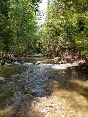 An Ontario Trout creek