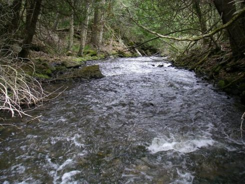 A small trout creek in Ontario