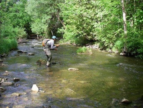 Fly fishing for Brook trout on an Ontario River