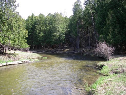 The Pine River