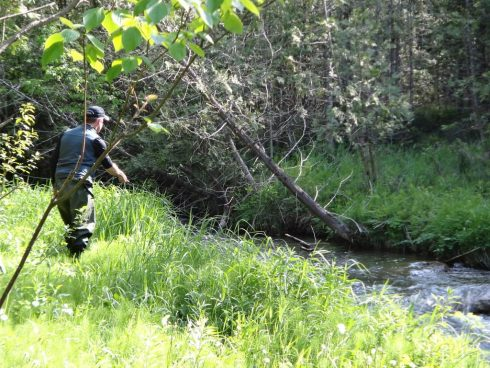 An angler fishing a small Ontario stream for brook trout