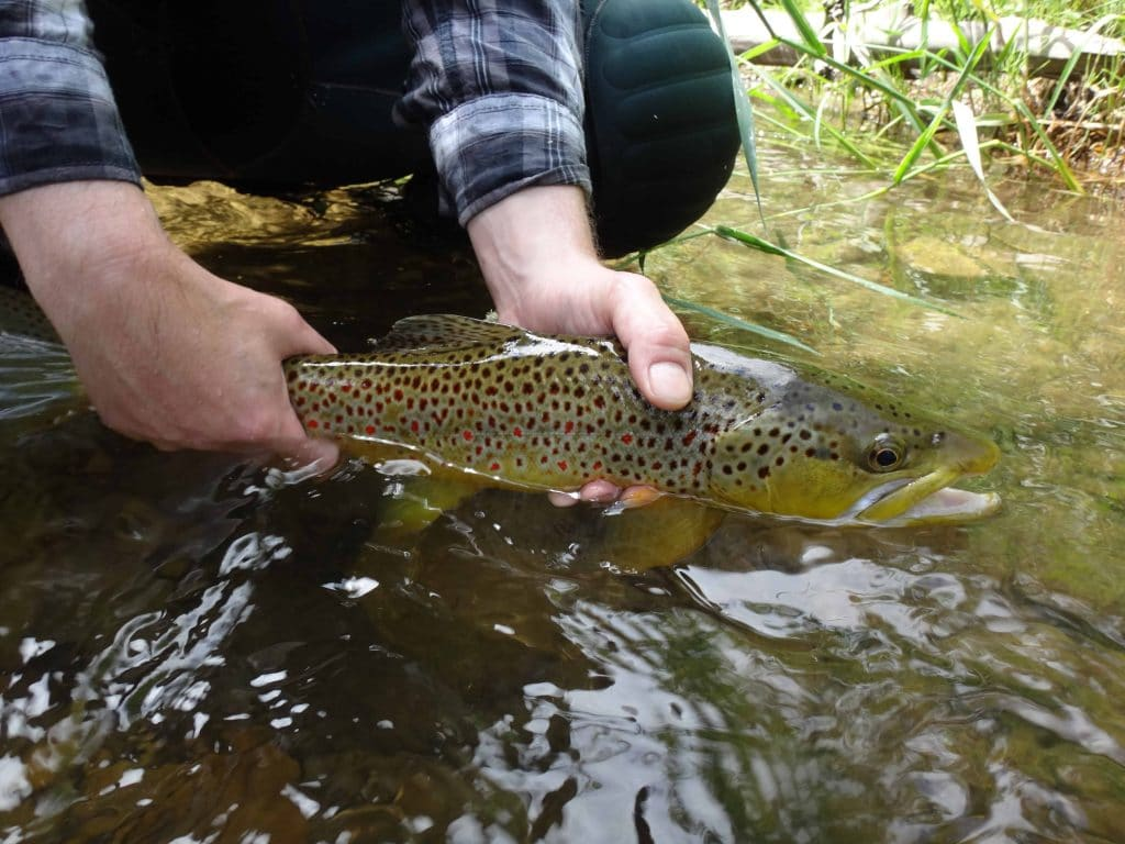 Best Times To Fish In Ontario