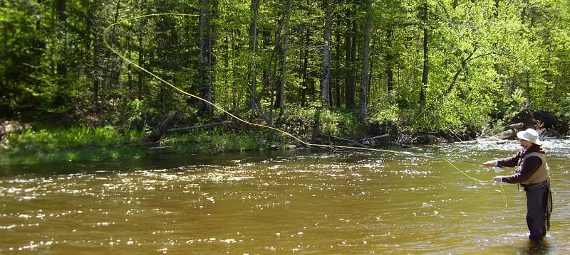 dry fly fishing in Ontario on the Beaver river
