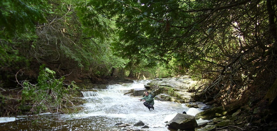 Fishing for Ontario Brown trout under cover of trees