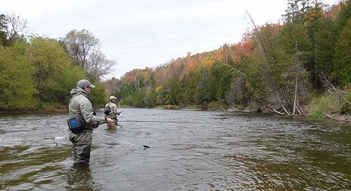 Fly Fish Ontario – 8 Best Fly Fishing Rivers
