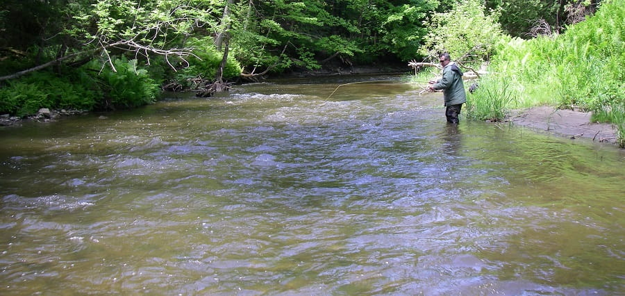 Trout Fishing Near Toronto is good on the Humber River