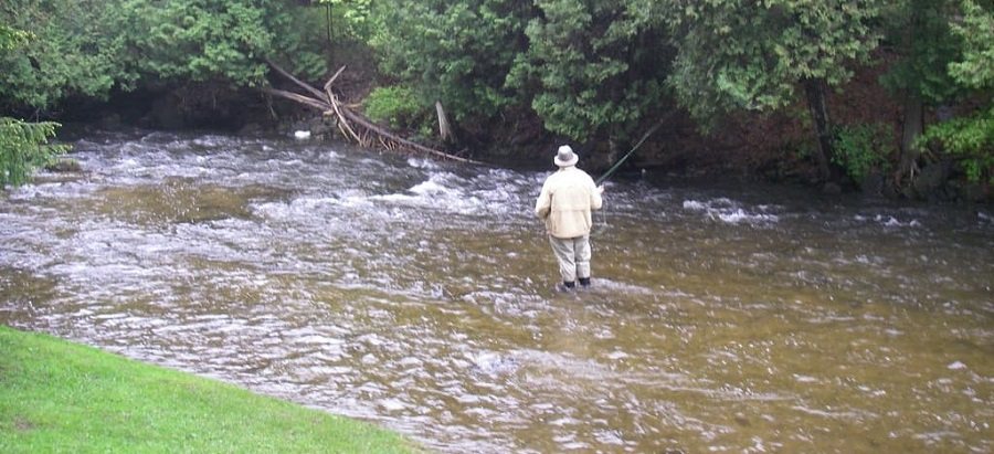 An angler fly fishing the Upper credit river in the brook trout section