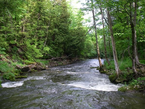 Small rivers like the Noisy river can be good for brook trout.