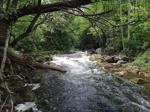 Small Creeks like this can have great fishing for trout and steelhead